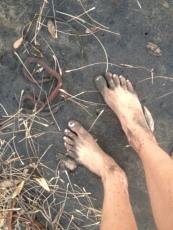Sea_Legs